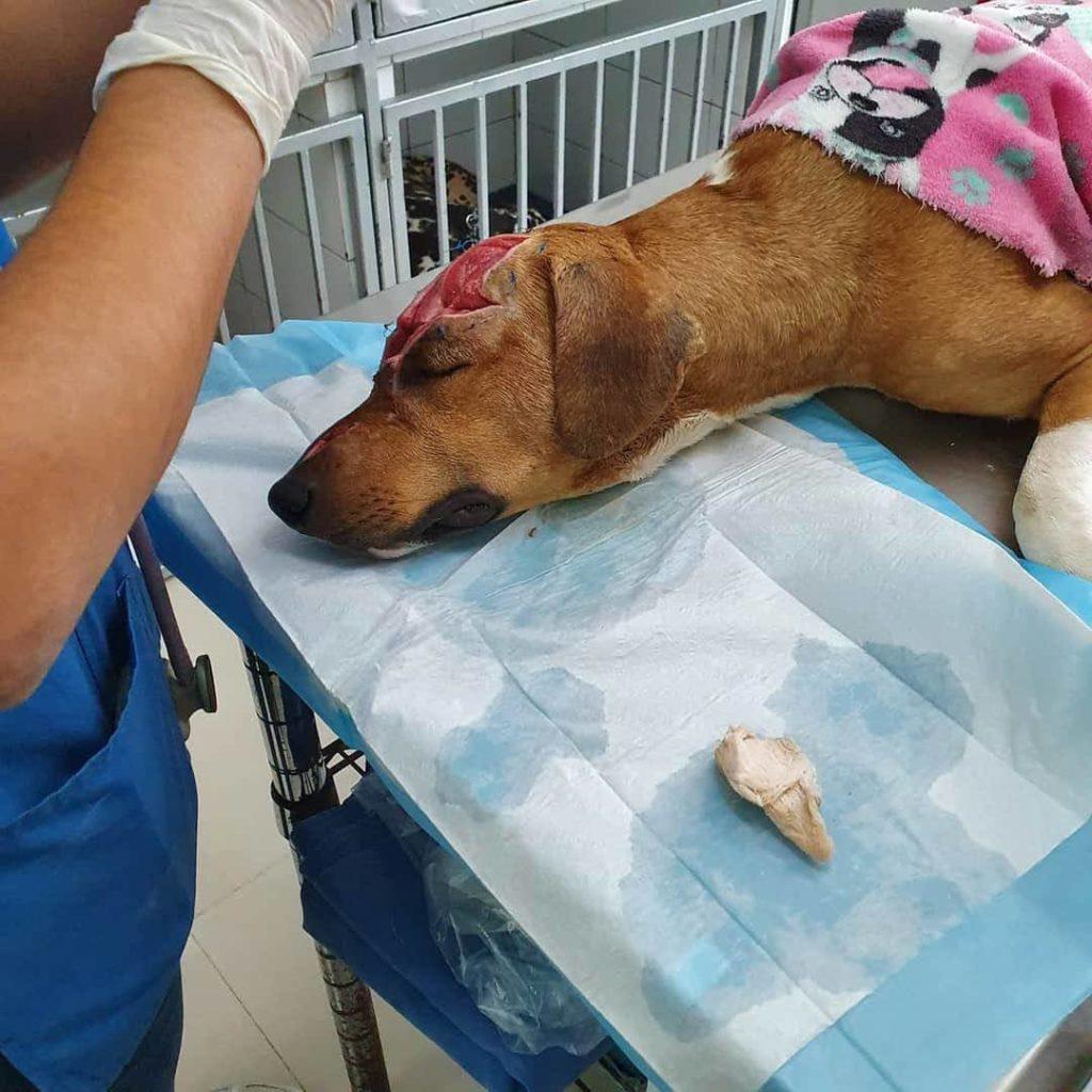Hasta 4 años de carcel por maltratar a un animal